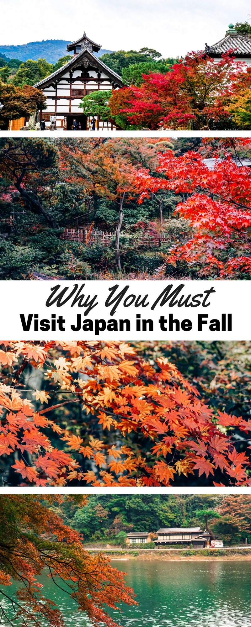 Whhy You Must Visit Japan in the Fall